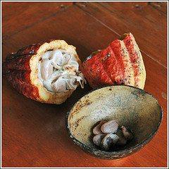 Cacao Pod Fruit Beans